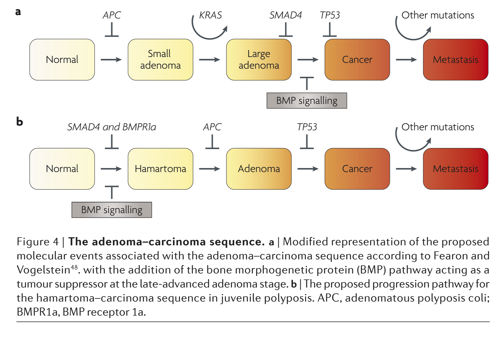 Adenoma To Carcinoma Sequence Crc Digestive Disease Dashboard