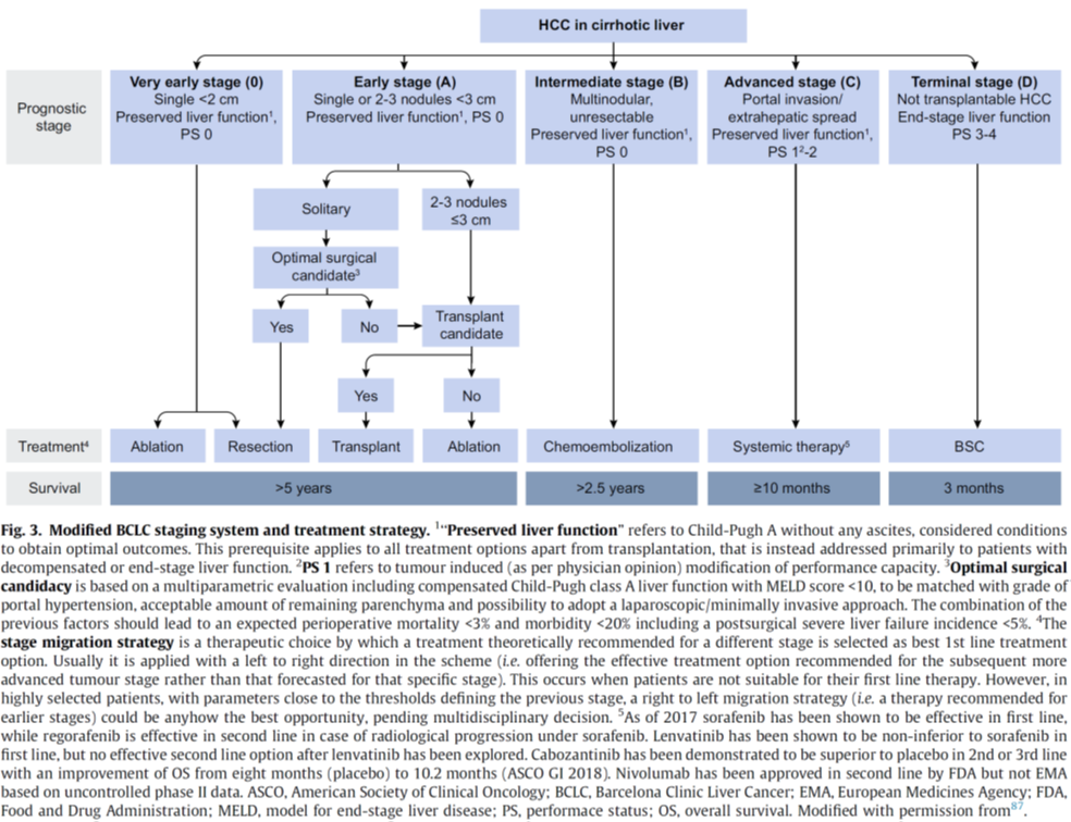 Hepatocellular carcinoma (HCC) treatment strategy in cirrhotic liver. EASL guidelines.